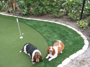 Artificial Grass for Dogs West Palm Beach